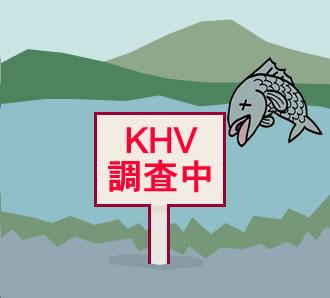 コイヘルペス調査 | 広島県環境保健協会(かんほきょう)